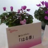 ガーデンネックレスin 横浜赤レンガ倉庫