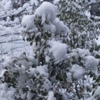 雪が降ると