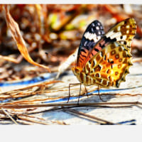 賀集公園の蝶さんたち