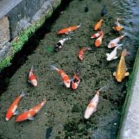 【KSM】日本の用水路の水の驚異的な透明度が話題に。海外「やっぱり日本は凄かった」