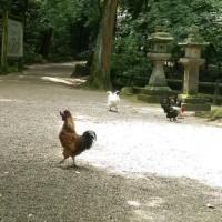 石上神宮に行ってきました