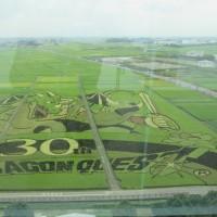 行田市の田んぼアートを見に行く