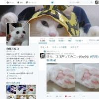 1月15日(日)のつぶやき 猫垢フォロワー様の、みニャさん(皆さん)に感謝ですニャ(ФωФ)/ #フォロワー1万人