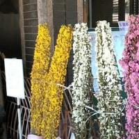 鎌倉市・大船植物園で春見物 その4