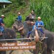 タイチェンマイの象たち