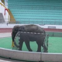 象とPK対決!