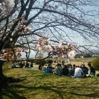 【四季の交々】花見条件!ほぼ揃った平日の宴