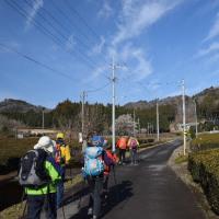 妖精の森ミツマタ群生地・鶏足山
