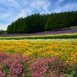 カラッと爽やかな北海道の夏