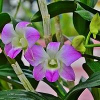 神代植物公園 蘭