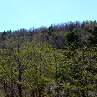 新緑の知床。春先の知床。