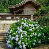 粟井神社【香川県観音寺市】