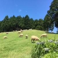 平成28年度体験学習(六甲山牧場)