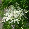 向日葵*ハマボウ*ニワナナカマド*カンゾウの花*ラズベリー