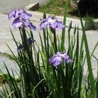 6月になり、自坊に潤いある花々の風景あり!