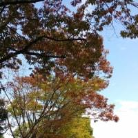 暑い~~秋の日に