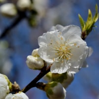 白い花2つ