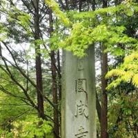 円成寺 運慶二十歳の大日如来、般若寺 花の寺の山吹(0)
