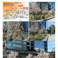 花巡り 「桜-その391」 ベルサール新宿 セントラルパーク新宿