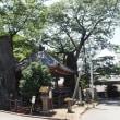 根古屋神社(ねごやじんじゃ)の大ケヤキ 山梨県北杜市