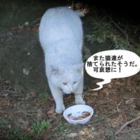 また猫が捨てられた!。