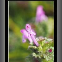 小さな野草の花