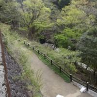 面河渓関門の様子(4月29日)