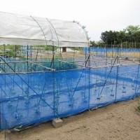 2017年_トマトの雨除けシート取り付け、キュウリの支柱とネット張り
