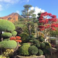 高社山を借景にモミジの紅葉が映える庭園