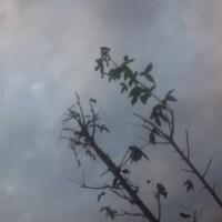 仙台の空11月30日