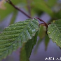 久しぶりの纏まった雨。