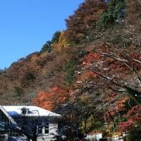2016年11月25日撮影、11月24日の降雪が積雪となる、東京の積雪明治8年以降は初、11月の積雪はあり得ない、積雪の上に紅葉の落葉、もみじの上に積雪、このアンバランスな現象を写真に納めておきたい