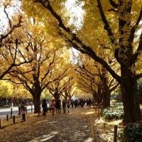 神宮外苑のいちょう並木ウォーキング