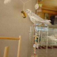 なのたんの鳥さん🎵