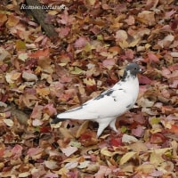 過ぎゆく秋の鳥たち