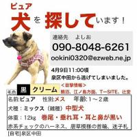 【拡散希望】迷子犬〜横浜、戸塚、藤沢、辻堂〜