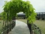 新宿のオアシス 屋上庭園