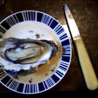 松島の牡蠣(カキ)