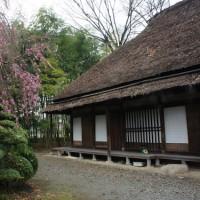 平山家住宅  桜の頃