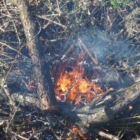梅の木の残渣を野焼き。