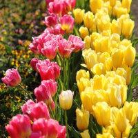 南国(指宿)からの花だより‥⑤ 【ひで某】