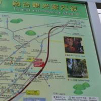 一関市東山町長坂のアズマイチゲ(東一華) 2017年3月30日(木)