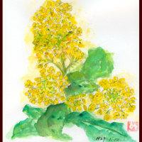 春の先取りーもう菜の花が咲いて