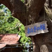 八戸市 長者山新羅神社の桜☆