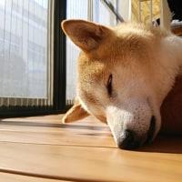 お日様♪光合成♪瞑想中!?
