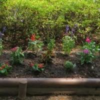 2015年 6月25日 神田上水公園「防犯花壇」の植え替えが行われました。