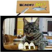 #猫に#おむすびありかしら