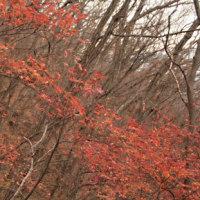 紅葉の大岩山・行道山周回 その2