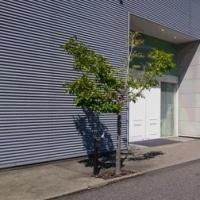 本日発売「N」アルバム&SMGO