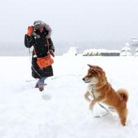 山中湖 春の大雪